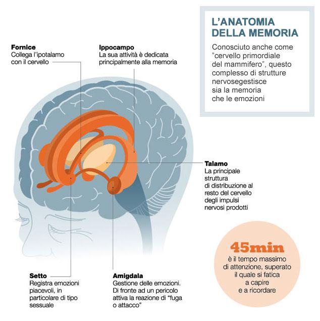 Strutture anatomiche cerebrali deputate al funzionamento della memoria e delle emozioni.