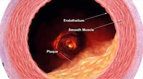 Endotelio vascolare