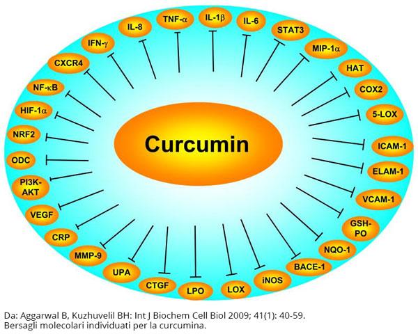 Bersagli molecolari della Curcuma