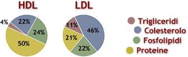 Differenze costituzione lipoproteine