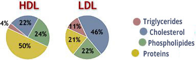 Differences between hdl and ldl