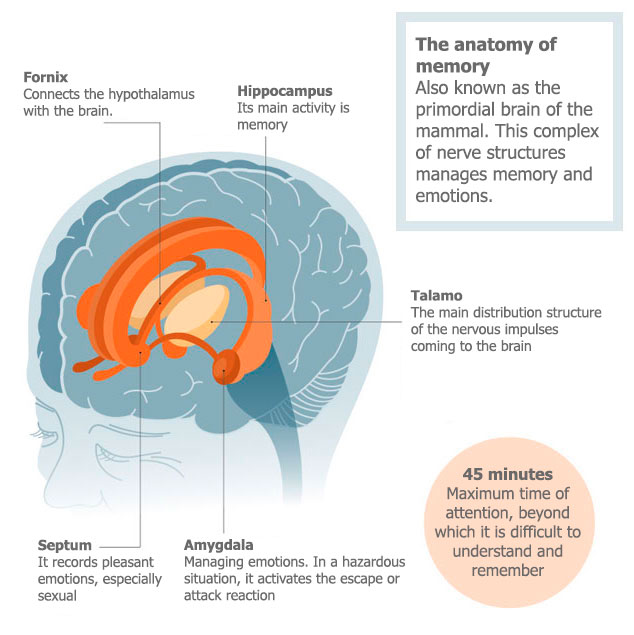Brain anatomy structures that function in memory and Of emotions.